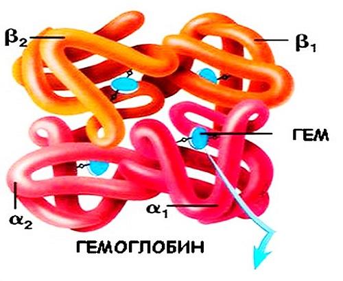 Норма гемоглобина у мужчин