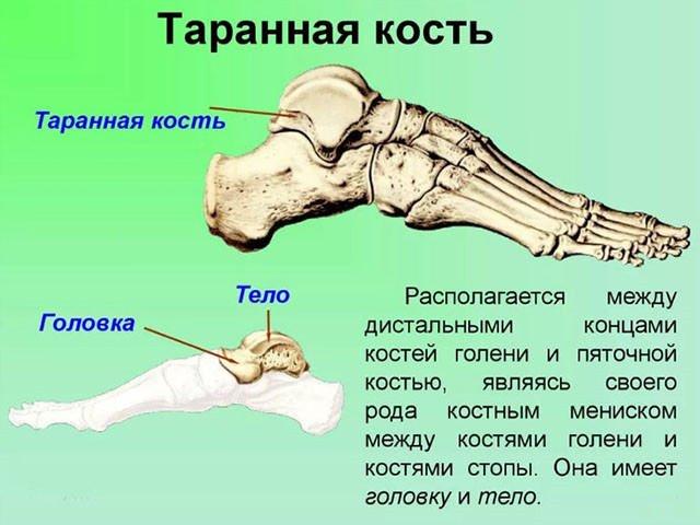Современные хирургические методы излечения перелома таранной кости стопы