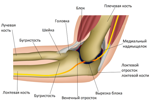 Причины воспаления локтевого сустава и способы лечения