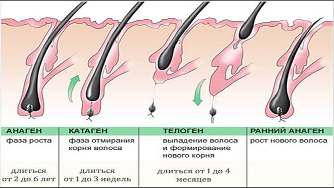 Симптомы, диагностика и лечение телогеновой алопеции